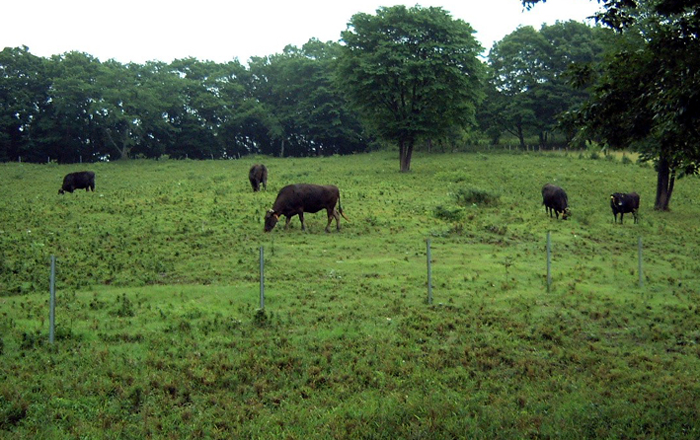 草地造成-ルーラル電子図書館―農業技術事典 NAROPEDIA